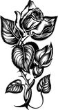 Rose. Engrawing picture. Vector illustration Royalty Free Stock Images