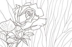Rose Стоковые Фотографии RF
