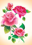 Rose. Greeting card or picture for embroidery Royalty Free Stock Photography
