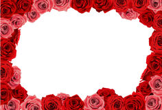 Rose. Photo frame formed by many roses Royalty Free Stock Photography