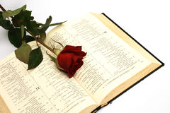 Rose. On a photo a rose and Holy Bible Royalty Free Stock Images