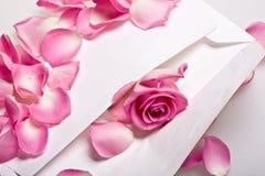 Free Rose Royalty Free Stock Photos - 3308828