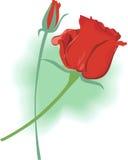 Rose Стоковое Фото