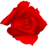 Rose. Beautiful image, illustration of a red rose Royalty Free Stock Image