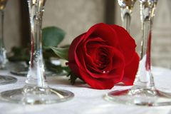 Rose. Red rose by champagne glasses Stock Photos
