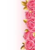 Rose Fotografia Stock