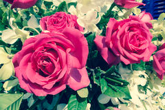 Rose Foto de archivo