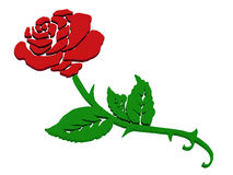 Rose Стоковое Изображение