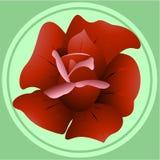 Rose royalty free illustration