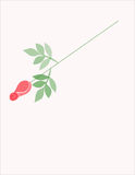 Rose. One red rose on light pink background Stock Photo