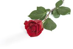 Rose. A valentine rose for your sweetheart Stock Photo