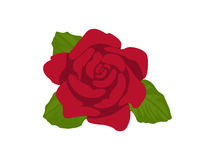 Rose. Red rose on transparent background Stock Image