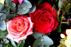 rose Immagine Stock