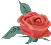Rose Illustration Stock