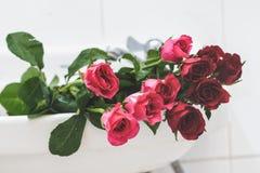 Rose Image stock