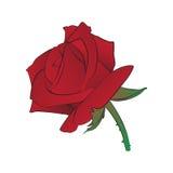 Rose stock de ilustración