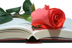 Rose. Red rose on a book Stock Images