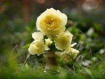 Rose Images libres de droits