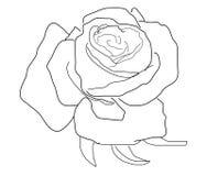 Free Rose Stock Photo - 7628370
