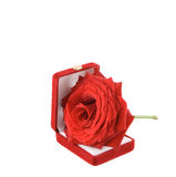 Rose. Red rose in the box Royalty Free Stock Images