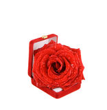Rose. Red rose with water-drops  in the box Royalty Free Stock Photos