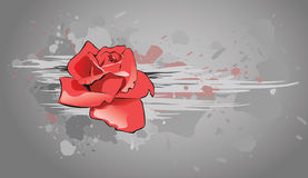Rose. Red rose on a grey background Royalty Free Stock Photography