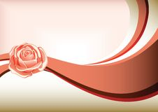 Rose Royalty Free Stock Photos
