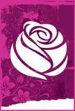 Rose Стоковые Изображения RF