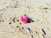 A sad rose on the beach stock images