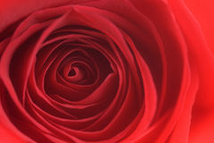 Rose abstract stock images