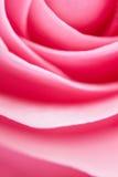 Rose Abstract. Macro abstract of pink rose petals Royalty Free Stock Image