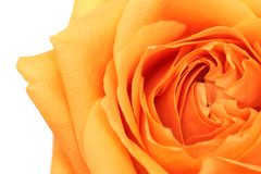 Rose abstract over white Royalty Free Stock Image