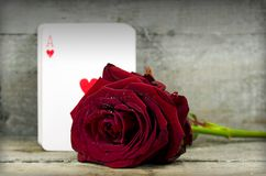 Rose and ace Stock Photography
