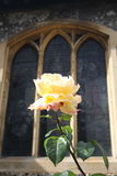 A rose. Against a stain glass window Stock Photography