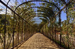 Rose Alley Royalty Free Stock Photography