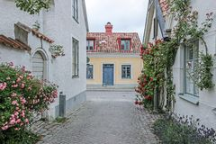 Rose alley in visby sweden. Rose alley with buildings in visby sweden Royalty Free Stock Image