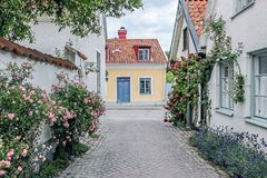 Rose alley in visby sweden. Rose alley with buildings in visby sweden Stock Photos