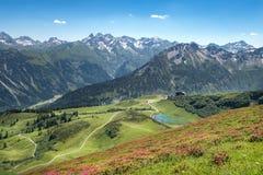 Rose alpine nelle alpi di Allgau Immagini Stock