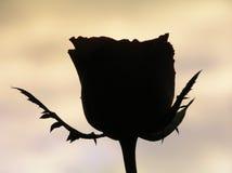 Rose als Schattenbild Stockbild