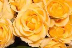 Rose amarilla Imágenes de archivo libres de regalías