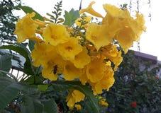 Rose amarilla en cielo fotografía de archivo libre de regalías