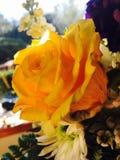 Rose amarilla en el Sun Imagenes de archivo