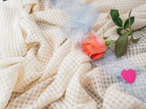 Rose anaranjada Fotografía de archivo libre de regalías
