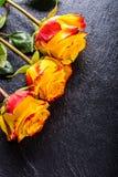 Rose anaranjada Amarillee color de rosa Varias rosas anaranjadas en fondo del granito Foto de archivo libre de regalías
