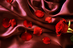 Free Rose And Silk Stock Photography - 16123782