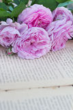 Rose and an antique book. Pink rose and an antique book lying on the old boards Royalty Free Stock Images