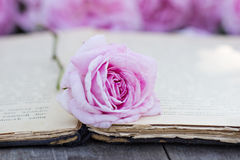 Rose and an antique book. Pink rose and an antique book lying on the old boards Royalty Free Stock Photography