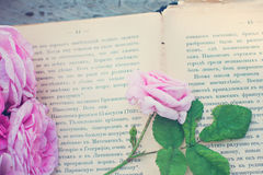 Rose and an antique book. Pink rose and an antique book lying on the old boards. Toned Photo Stock Photography