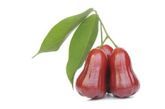 Rose apple. On white background Stock Photography