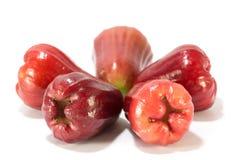 Rose Apple Royaltyfri Fotografi